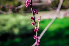 开花的庭院 库存图片