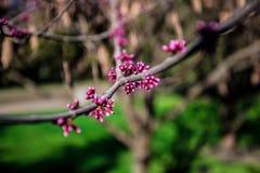 开花的庭院 图库摄影