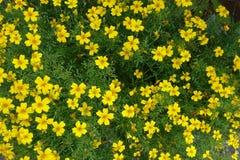 开花的开花的花背景黄色和绿色 库存照片