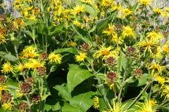 开花的开花的花背景黄色和绿色 库存图片