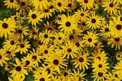 开花的开花的花背景黄色和绿色 免版税图库摄影