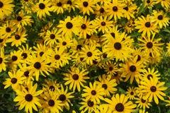 开花的开花的花背景黄色和绿色 免版税库存图片