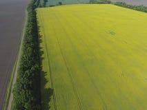 开花的强奸和森林传送带的领域风保护的 强奸,有黄色花的一棵syderatic植物 与siderates的领域 免版税库存图片
