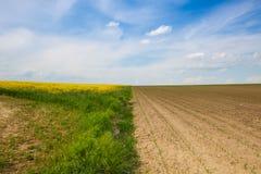 开花的强奸领域和领域用年轻玉米 免版税库存照片