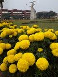 开花的快活的金子在校园里 免版税库存图片