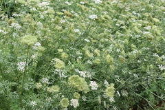 开花的新鲜的绿色植物 免版税图库摄影
