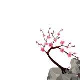 开花的日语佐仓 在峭壁的桃红色樱桃树 背景查出的白色 例证 向量例证