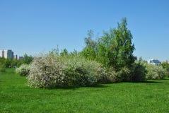 开花的春天庭院 免版税库存图片
