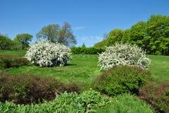 开花的春天庭院 免版税库存照片