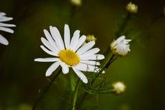 开花的春天植物,自然唤醒 免版税库存图片