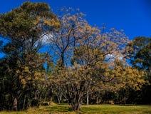 开花的春天结构树 图库摄影