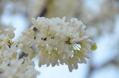 开花的春天 库存照片