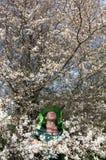 开花的李子和蜂农 免版税库存图片