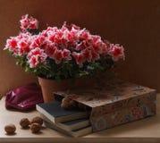 开花的杜鹃花和书 免版税库存图片