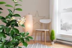 开花的柠檬树在一个舒适客厅有看法 免版税图库摄影