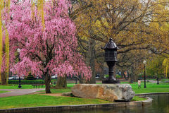 开花的树和亚洲灯笼 免版税库存图片