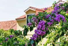 开花的树和修造的屋顶在Omis 免版税库存照片