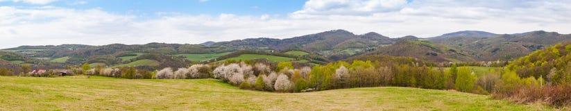 开花的树和山的全景 库存照片