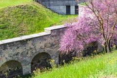 开花的树和本营墙壁在都市公园 库存照片