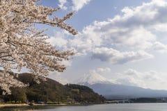 开花的树在与富士山在背景中,日本的Kawaguchi湖区域 免版税库存图片
