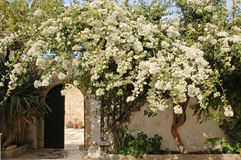 开花的树在修道院的庭院里 免版税库存图片