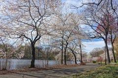 开花的树在公园在纽瓦克新泽西 免版税库存照片