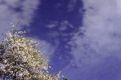 开花的树在夜空下 免版税库存图片