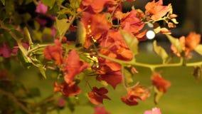 开花的树在庭院里 影视素材