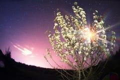 开花的树在晚上 免版税库存图片