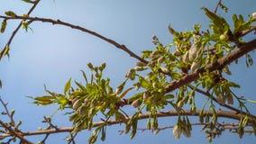 开花的树在蓝天背景的庭院里 春天,关闭 库存照片