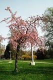 开花的树在阳光下 免版税库存照片