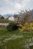 开花的树在Lofthus, Hardanger,挪威 免版税图库摄影