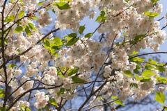 开花的树枝特写镜头与花的 墙纸、背景和纹理 库存照片