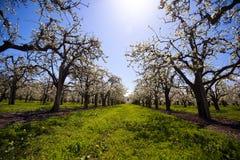 开花的树草和天空 免版税库存图片