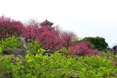 开花的桃子 免版税库存图片