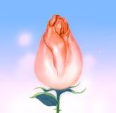 开花的桃红色玫瑰芽天空背景 库存图片