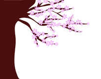 开花的桃红色结构树 库存图片