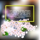 开花的樱桃分支在黑暗的背景的 图库摄影