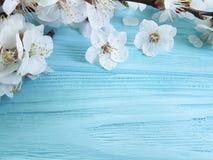 开花的樱桃分支,在蓝色木背景 免版税库存照片