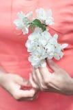 开花的樱桃枝杈 免版税库存照片
