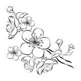 开花的樱桃 与花蕾的佐仓分支 一棵开花的树的黑白图画在春天 商标与 库存例证