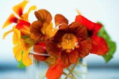 开花的水芹油花束在玻璃,特写镜头的 库存图片