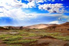 开花的沙漠 免版税库存照片