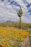 开花的沙漠 库存照片
