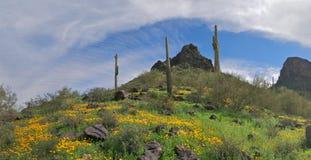 开花的沙漠 库存图片