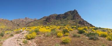 开花的沙漠 免版税库存图片