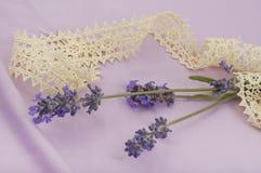 开花的淡紫色分支的浪漫构成  库存图片