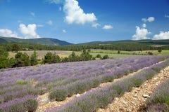开花的淡紫色的领域在普罗旺斯 库存照片