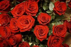 开花的深红玫瑰花束  免版税库存照片