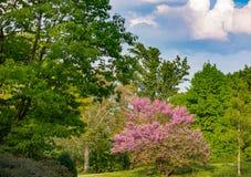 开花的灌木在公园 免版税库存照片